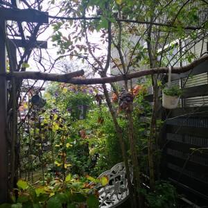 10月の庭木の