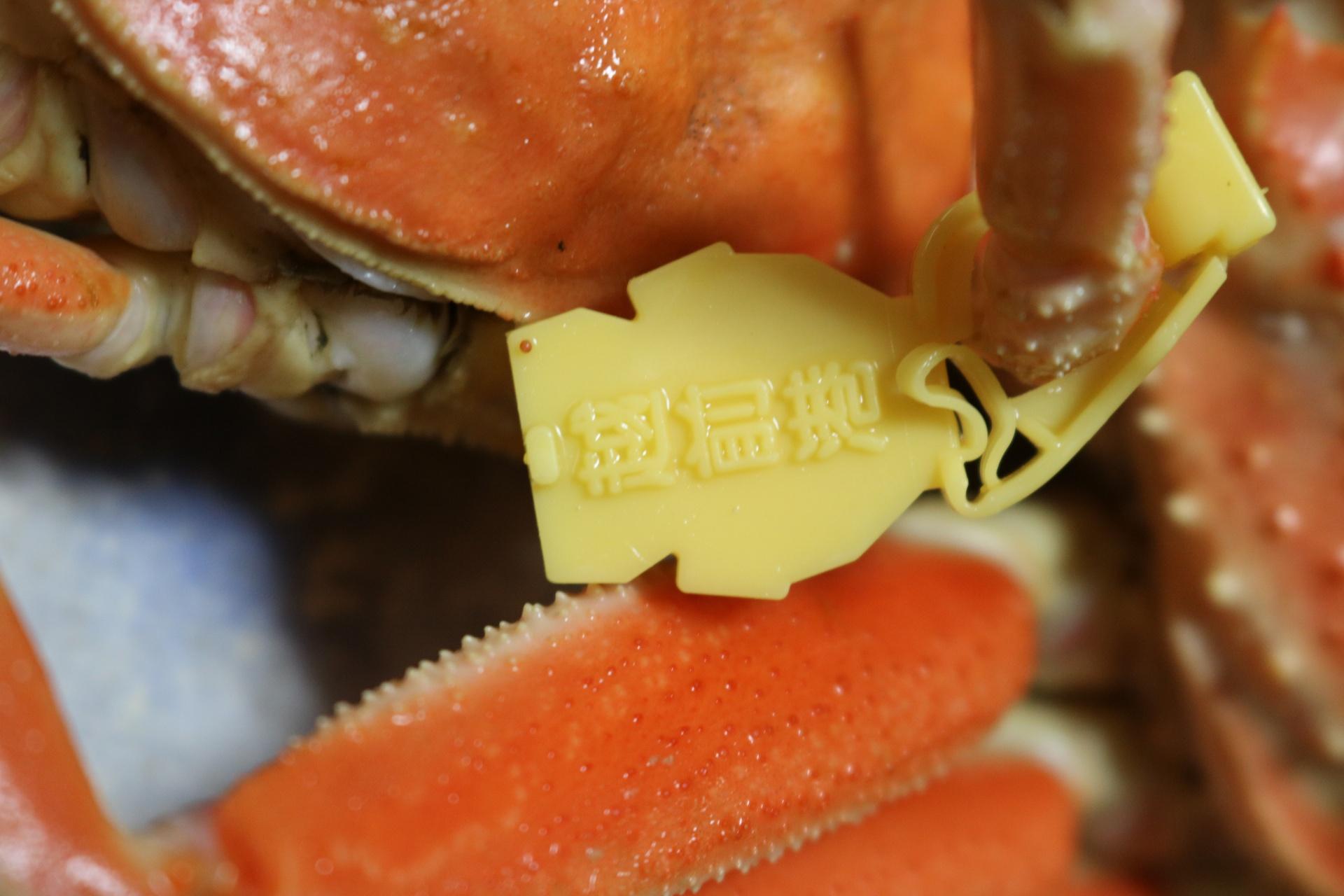 越前せいこ蟹